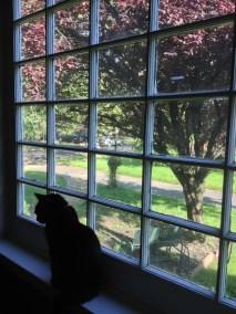 front window cat