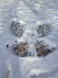 Keanna's snow angel