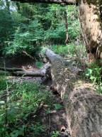 The log bridge.