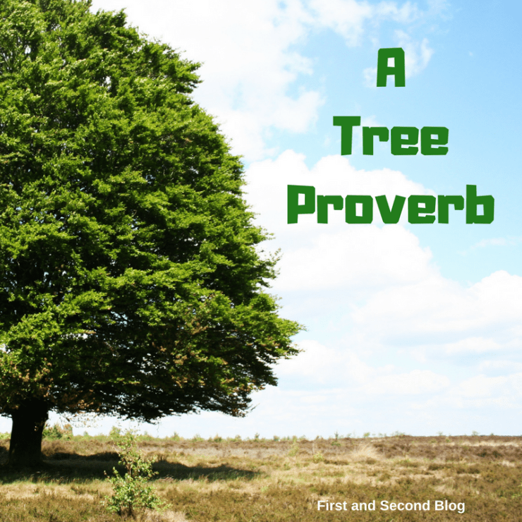 A tree proverb about trust in God