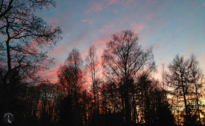evening_sky_behind_trees_3723
