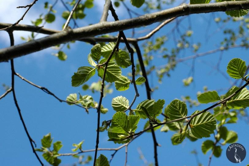trees_new_leaves1869