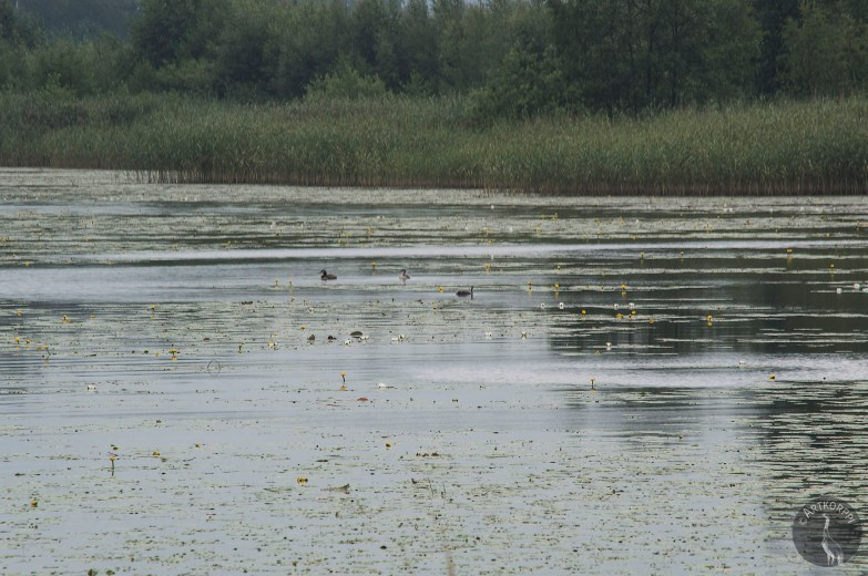 lake_of_waterlilies_0155p