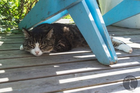 blue_and_cat_0033
