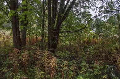 trees_0197p