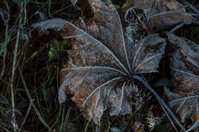 dark_leaf_0129p