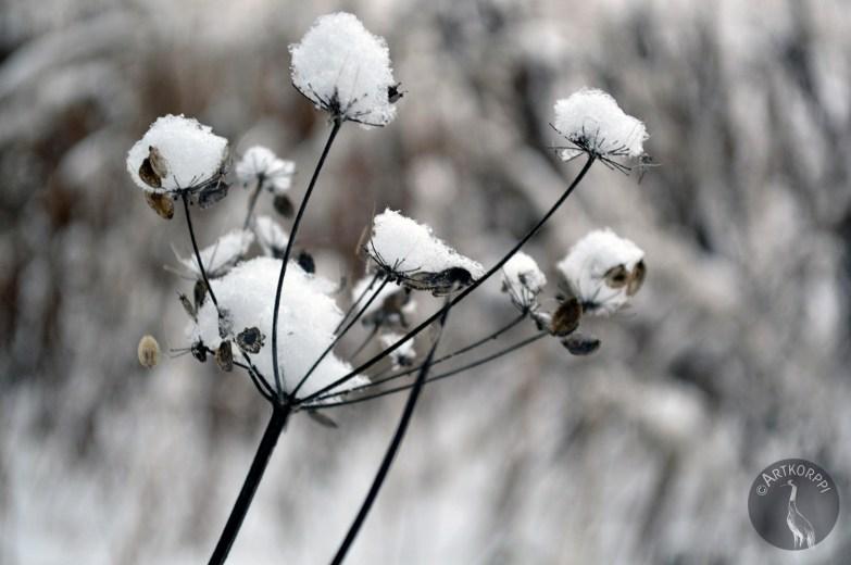 snow_on_0255p