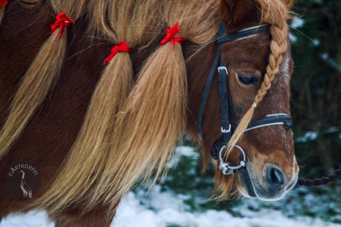 pony_0020p