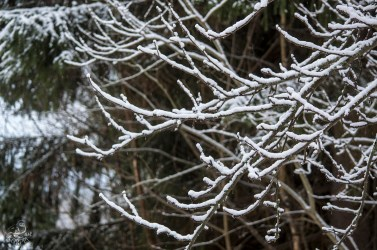 branches_0068p
