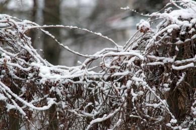 snowy_fence0130p