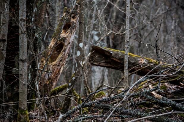 deadwood_0157p