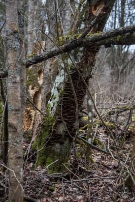 deadwoods_0153p
