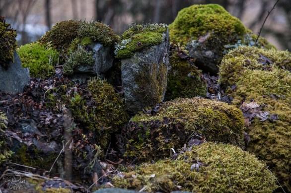 mossy_stones_0107p