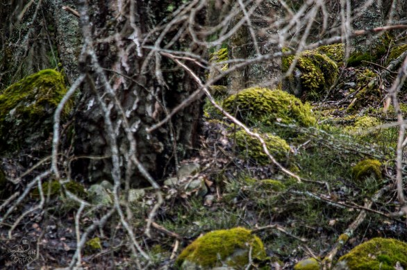 troll_forest_0081p