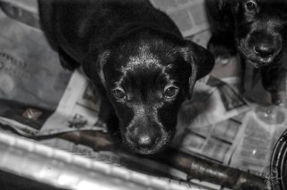 puppies_0024mvp