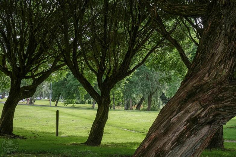 park_P1010868p