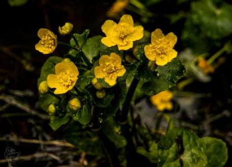 yellow_0053p