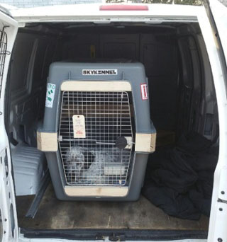 pet transport services boston new england north shore