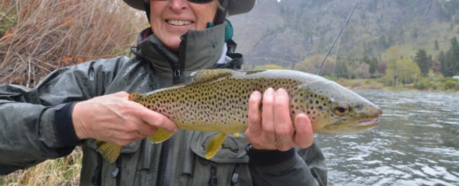 missouri, missouri river, first cast outfitters, dry fly, skwala, brown trout