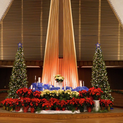 Christmas trees in the Sanctuary
