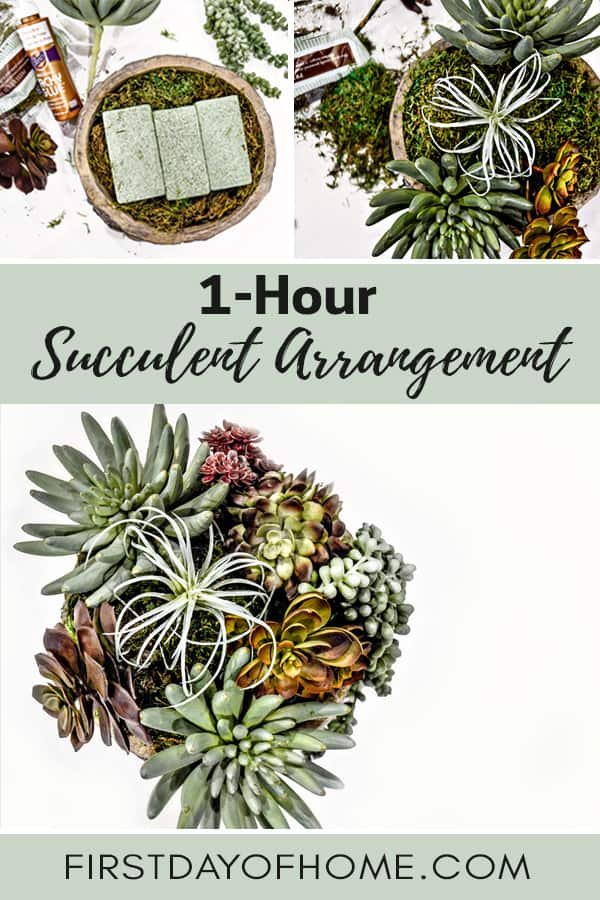 One-Hour Succulent Tutorial