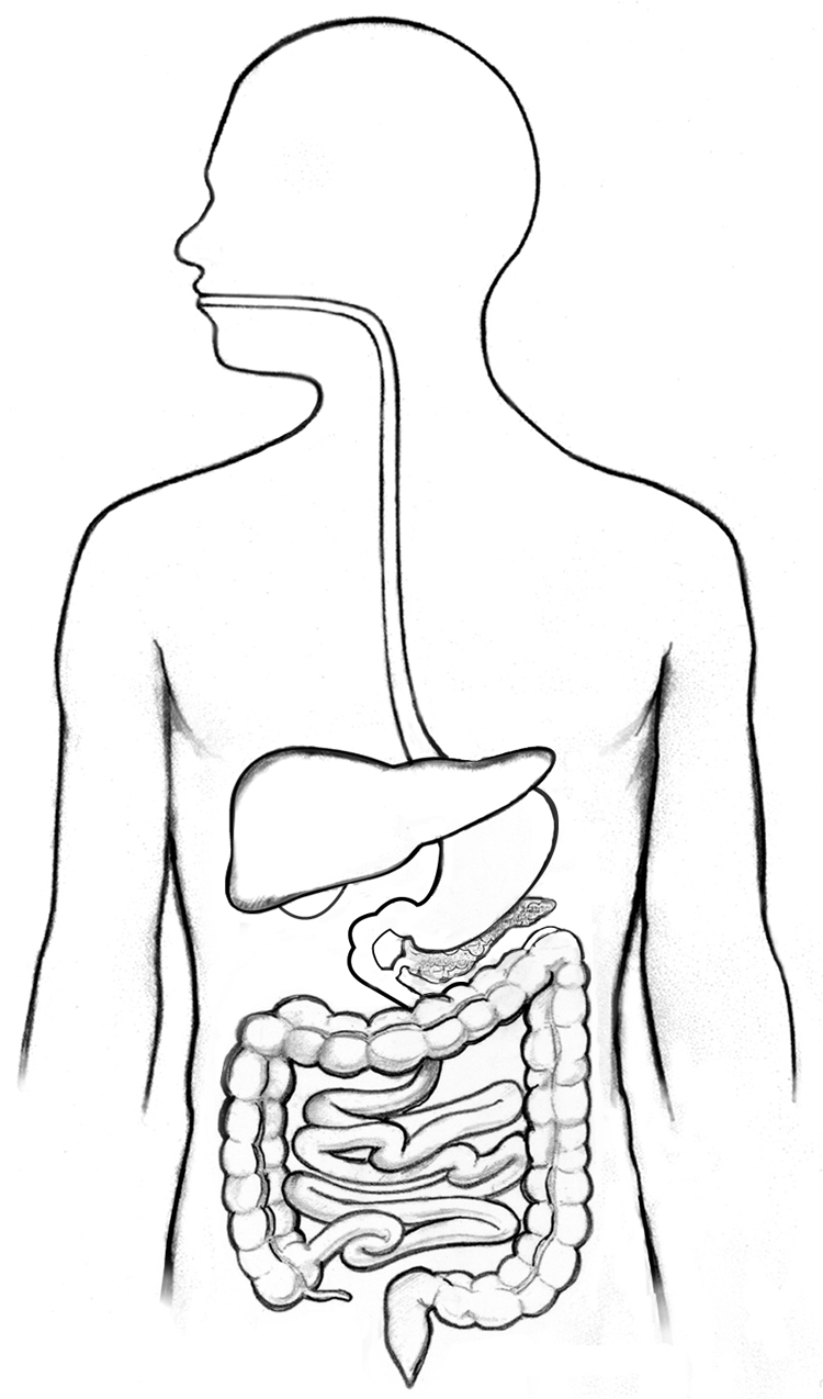digestive system diagram fill in