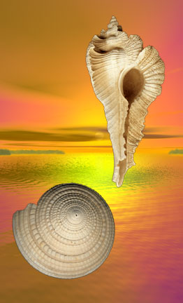 shellsky-1