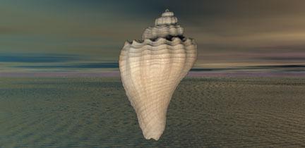 shellsky-3