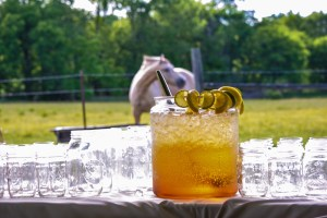 Sparkling Grape Punch on the Farm