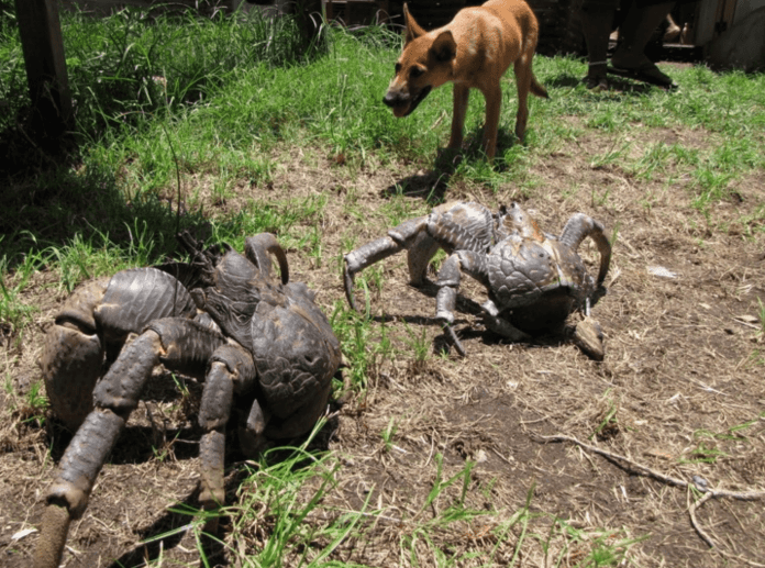 17 Amazing animals whose size will blow your mind