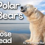 Polar Bear Close Read & New Year {FREEBIE}