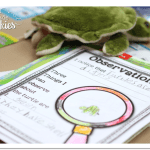 Turtle Close Read FREEBIE & End of Year Survival