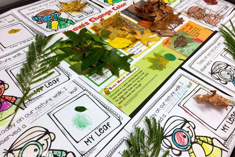 Leaf Hunt and a Contest from Scholastic