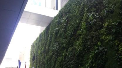 Green wall at the SFMOMA.