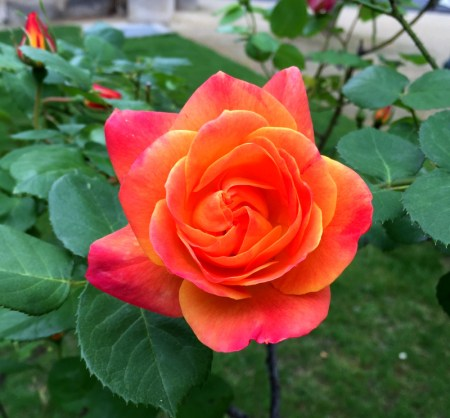 2 paris rose