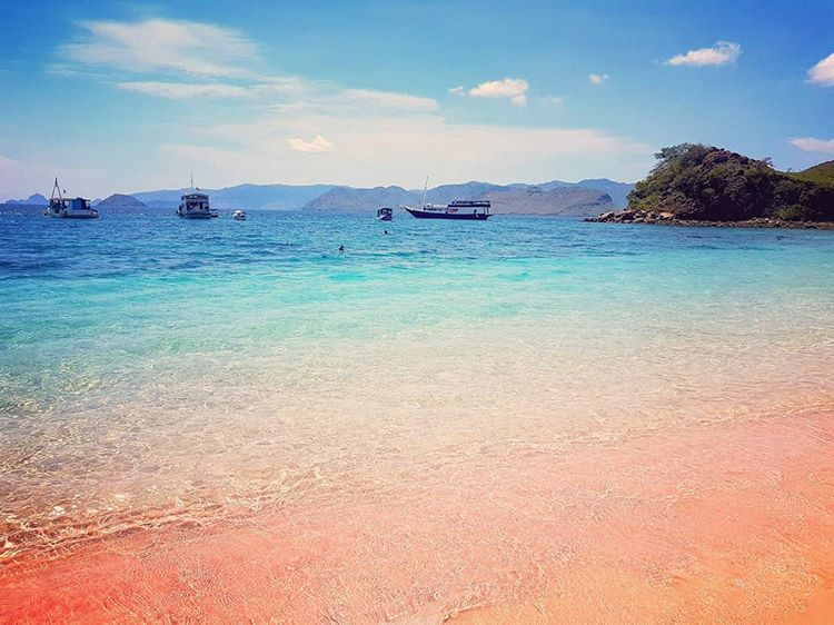 Inilah Pantai Pink Lombok Dan 3 Keindahan Utamanya