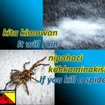 rain and spider