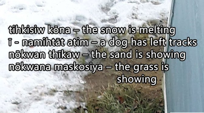 tihkisiw kōna – The snow is melting