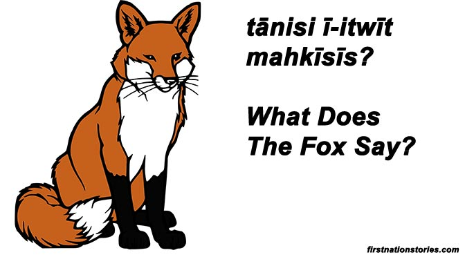 Tānisi ī-itwīt mahkīsīs? – What Does The Fox Say?
