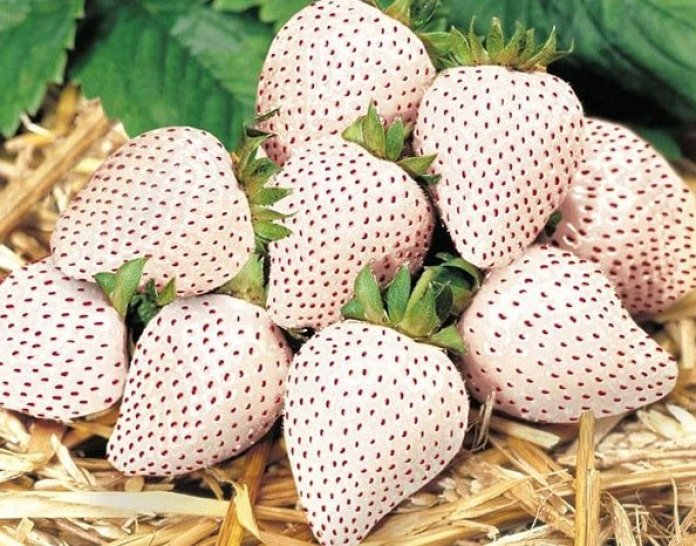 White strawberries are the food of angels