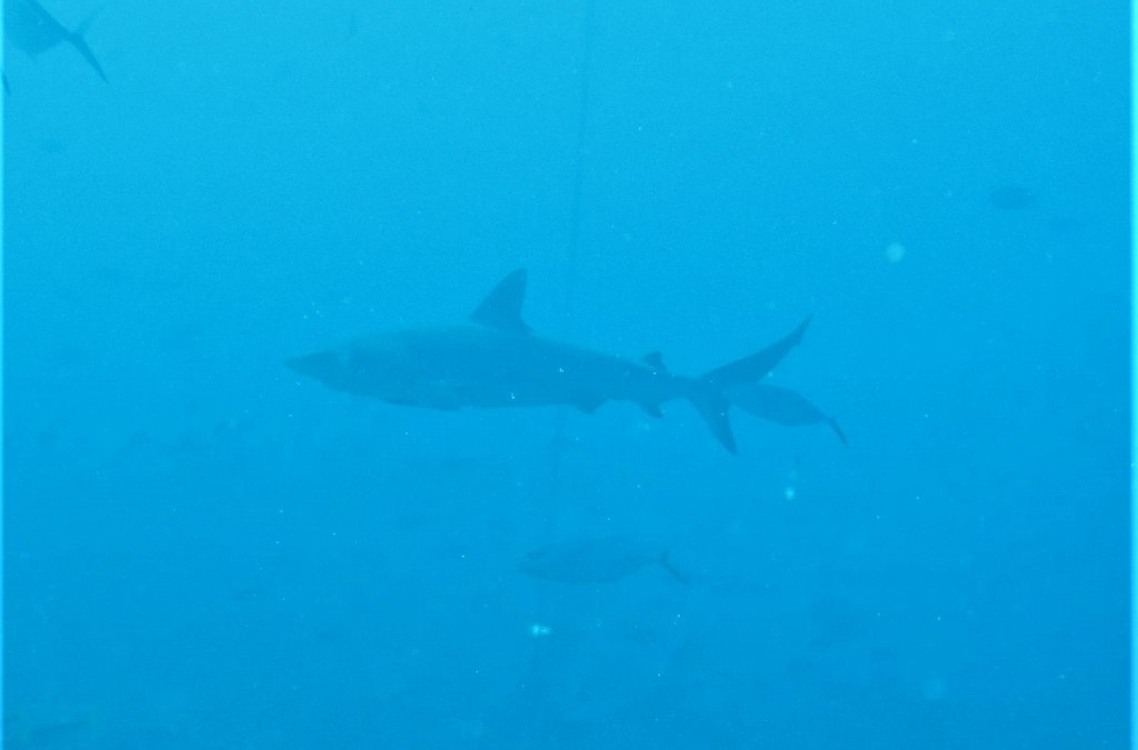 What It's Really Like to Swim With Sharks