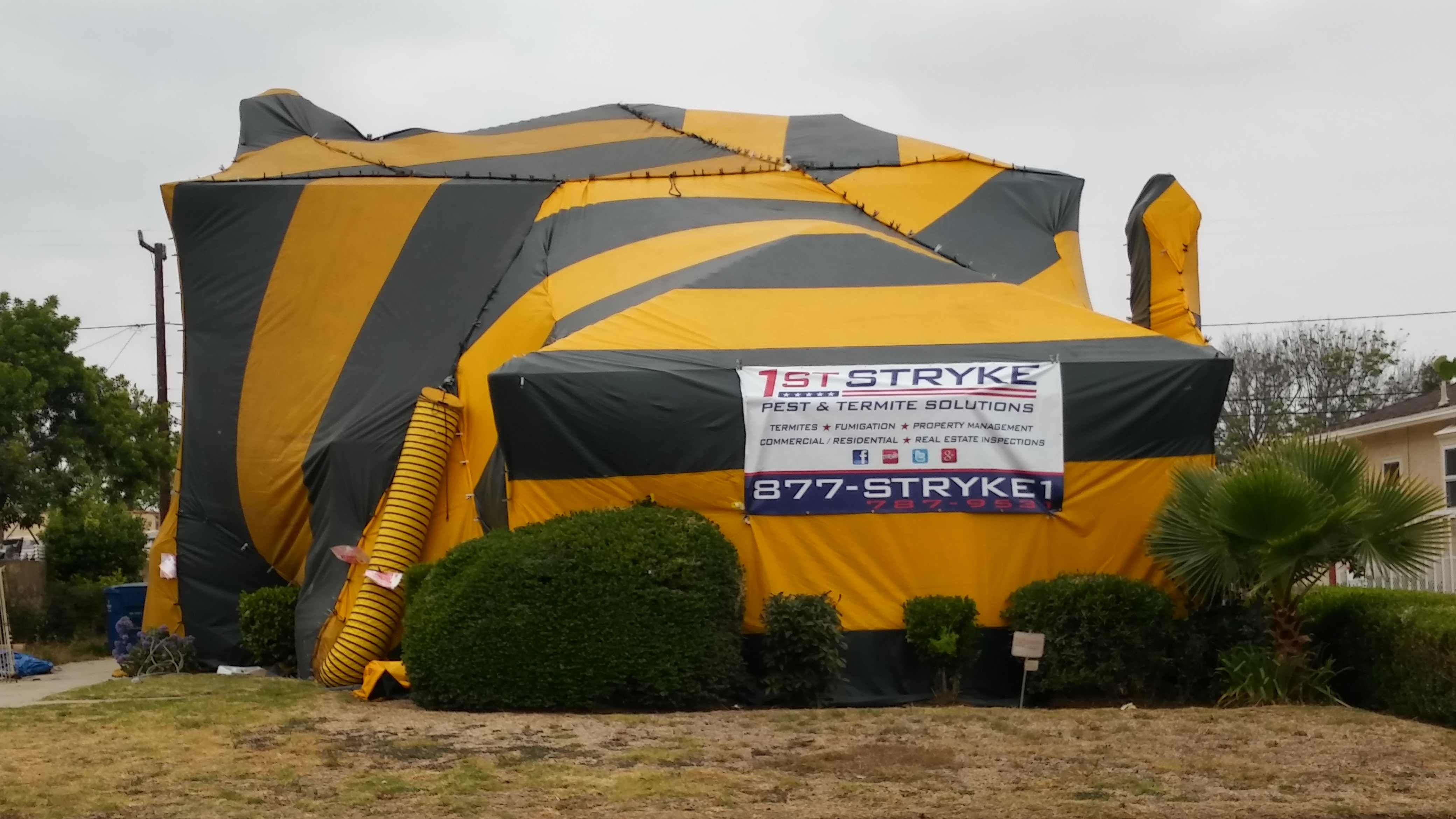 Fumigation Tent Cost & Fumigation For Bed Bugs Cost