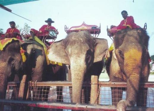 p184353-elephant_ride