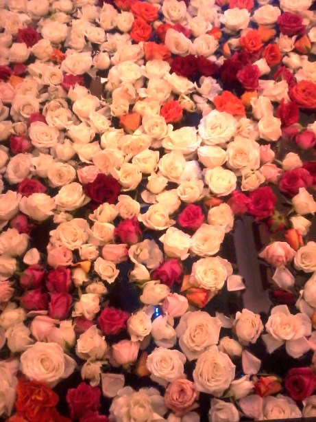 Don't you want to lay down on a bed of roses?