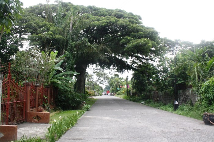 The huge tree provided a canopy at this part of Cinco de Noviembre Street.