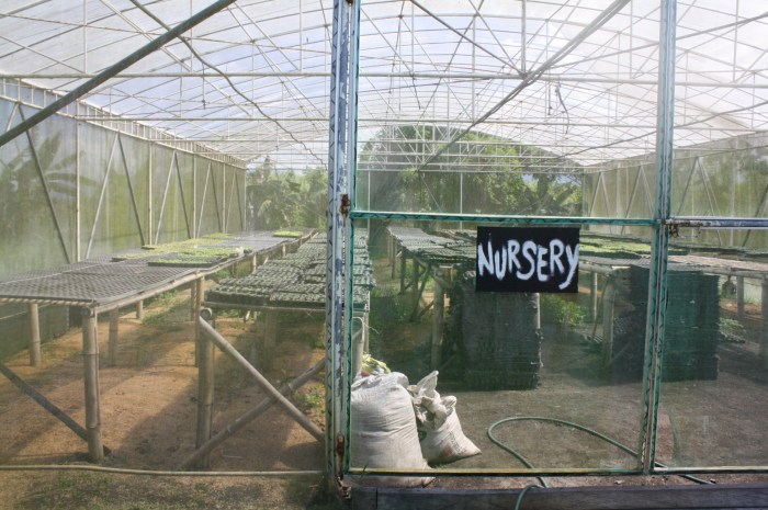 The nursery where the plants are cultivated.