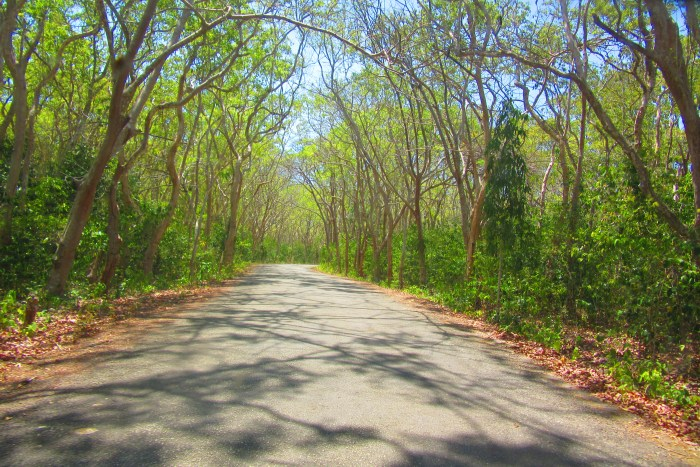 Salagdoong Forest