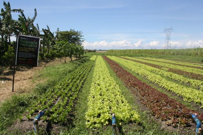Fresh Start Farm