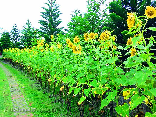 May's Organic Garden