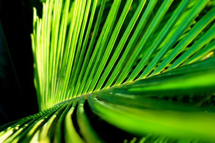 palm branches photo